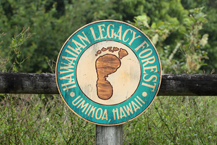 Hawaiian Legacy Forest Logo
