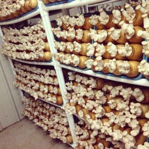 hamakua mushrooms